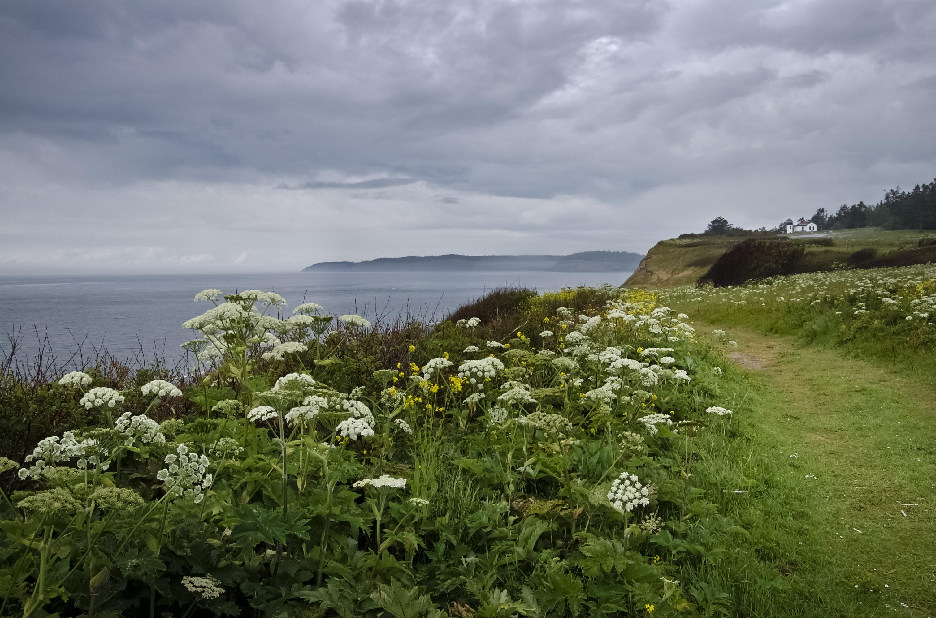 Blog - Writing On Whidbey Island